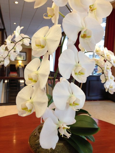 White orchids in Sheraton lobby