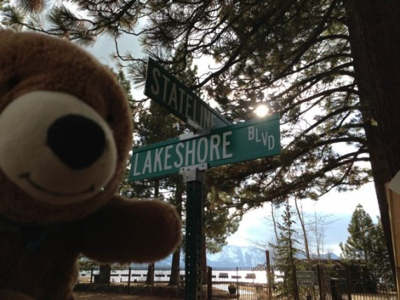 Bear with Lake Tahoe in background