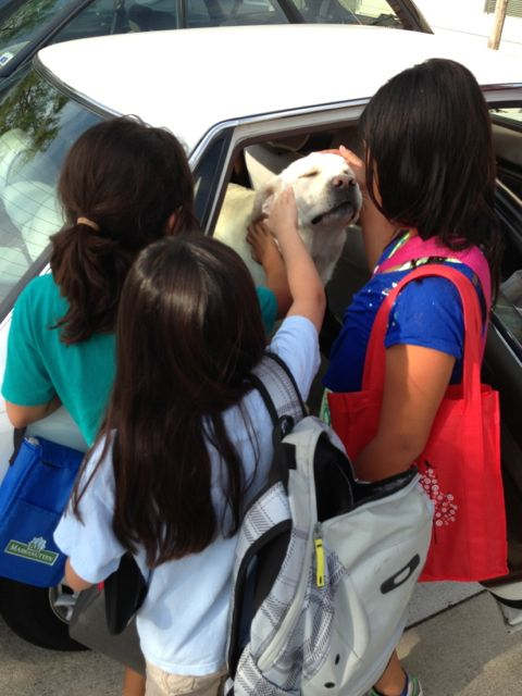 Lab in car surrounded by children