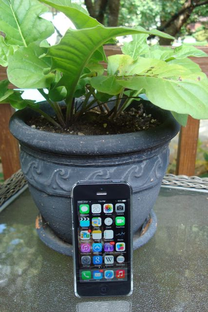 iPhone next to flower pot