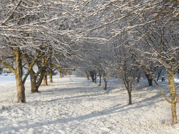 Winter falls upon the Orchard, confirming it is now time to rest