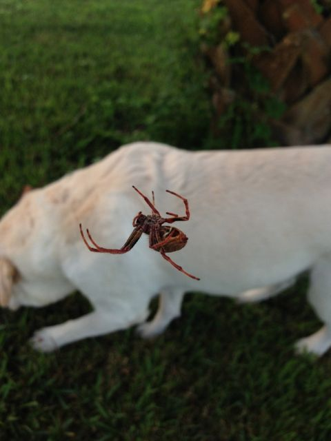 closeup spider photo with white lab in background