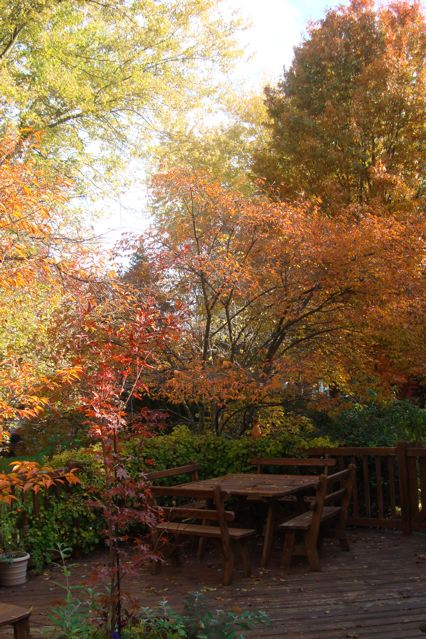 Autumn foliage and empty wooden table