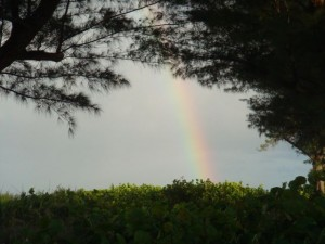Rainbow through the trees at Sanibel Island