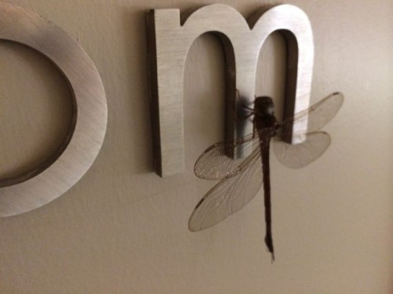 Dragonfly on Disney Convention Hotel  hallway sign