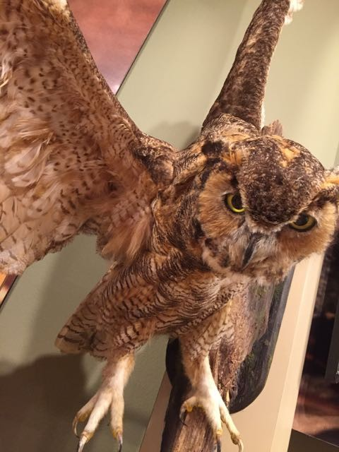 Owl taxidermy display in Nature preserve
