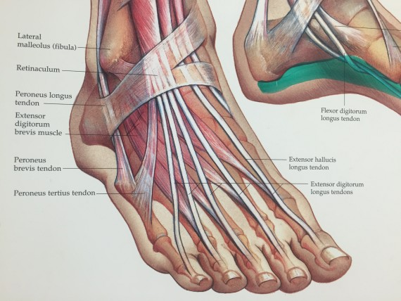 Doctor's office foot chart