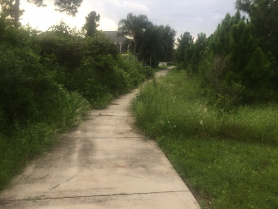 Orange County Florida overgrown sidewalk
